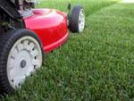 газон и газонокосилка
