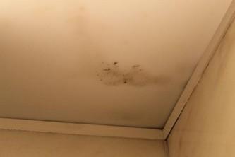 пятна на потолке