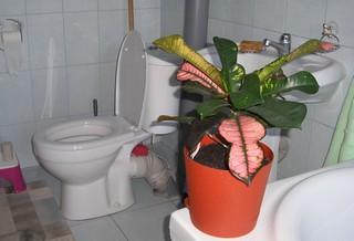 в туалете цветы